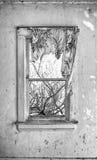 被撕碎的帷幕在老窗口里 免版税库存照片