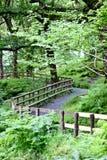 被操刀的小径在森林里,威克洛山,爱尔兰 免版税图库摄影
