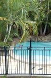 被操刀的池游泳 免版税图库摄影