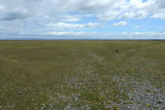 被操刀的私有地皮在火地群岛 库存图片