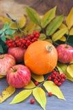 被收获的南瓜,苹果, ashberry和秋天离开  免版税图库摄影