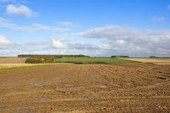 被收获的土豆领域在秋天 库存照片