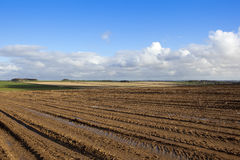 被收获的土豆领域 库存照片