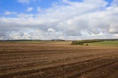 被收获的土豆领域 免版税图库摄影