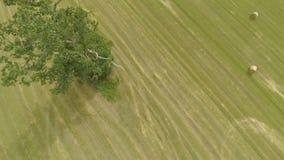 被收获的大麦领域鸟瞰图  免版税库存图片