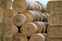 被收获的干草在KnävÃ¥ngen, Falsterbo,瑞典 免版税库存图片
