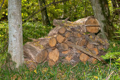 被收获的木头在森林里 免版税库存图片