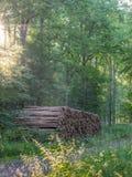 被收获的木头 库存图片