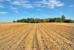 被收获的玉米田 免版税库存图片