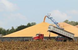 被收获的玉米 免版税库存图片