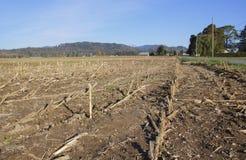 被收获的麦地在秋天 免版税库存图片