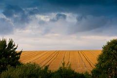 被收获的麦地 库存照片