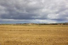 被收获的麦子和小山 免版税图库摄影