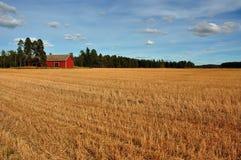 被收获的grainfield 免版税库存图片