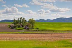 被放弃的农厂之家 库存图片