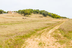 被放弃的农厂房子、软木树和路在圣地亚哥做Cacem 免版税库存图片