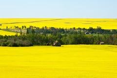 被放弃的农场和活跃农场油菜的 免版税库存照片