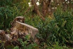被放弃的剁树 免版税图库摄影