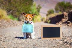 被放弃的和失去的狗 免版税库存照片