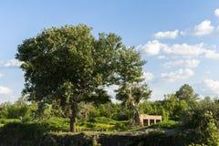 被放弃的地方、绿草和树 库存照片