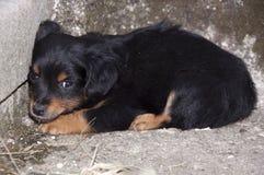 被放弃的小狗 免版税库存照片