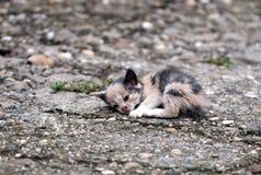 被放弃的小猫 免版税库存图片
