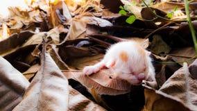 被放弃的小猫 免版税库存照片