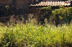 被放弃的工业站点野草接管的前提  库存图片