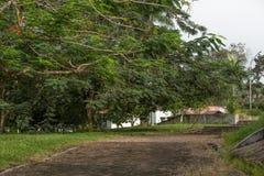 被放弃的庭院 免版税库存图片