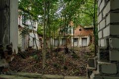 被放弃的房子内部 生长的树里面的窗口 库存照片