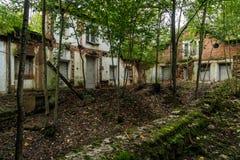 被放弃的房子内部 生长的树里面的窗口 免版税库存图片