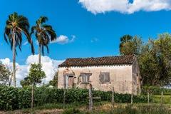 被放弃的房子和棕榈 免版税库存图片