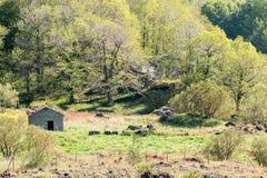 被放弃的房子在森林里 免版税图库摄影