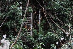 被放弃的托斯卡纳村庄-长满的快门 免版税库存照片