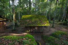 被放弃的村庄在森林里 免版税库存照片