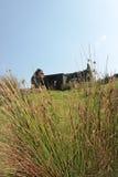 被放弃的村庄爱尔兰老 库存图片