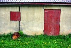 被放弃的棚子 免版税库存照片