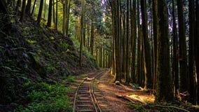 被放弃的森林铁路 库存照片