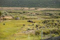 被放弃的汽车自己的草甸 图库摄影