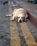 被放弃的狗哀伤的甜点 免版税图库摄影