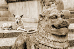 被放弃的狗 库存照片