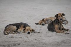 被放弃的狗 免版税库存图片