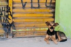 被放弃的狗 图库摄影