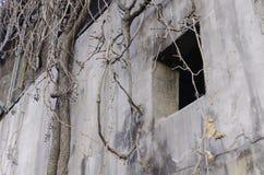 被放弃的空的房子和植物 免版税图库摄影