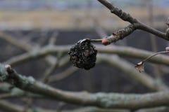 被放弃的老庭院 干燥树和灌木 一棵树在干燥的冬天 3个接近的干果类型 图库摄影