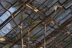 被放弃的老温室 免版税图库摄影