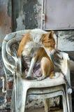 被放弃的街道狗 免版税库存图片