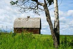被放弃的谷仓和白杨木树在夏天 免版税库存照片