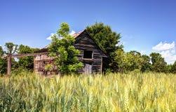 被放弃的谷仓和麦田 免版税库存图片
