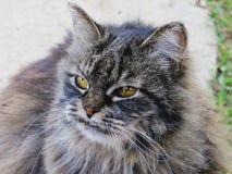 被放弃的野生猫 库存图片